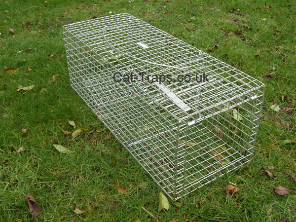 Where To Buy Humane Traps For Cats